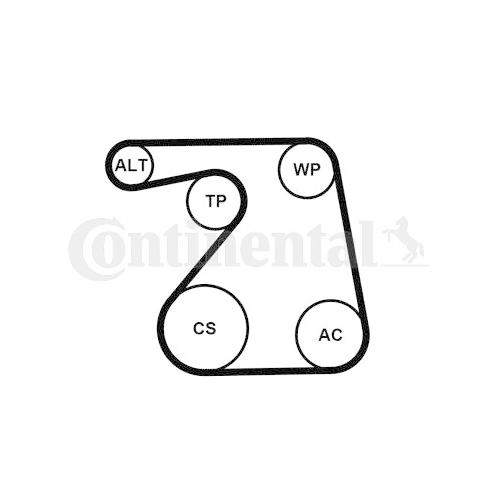 V-Ribbed Belt Set CONTINENTAL CTAM 6PK1360K1